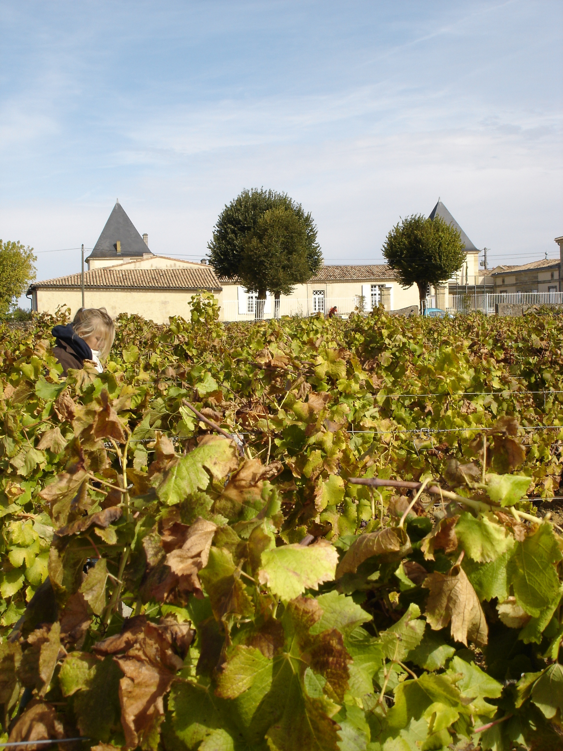 Climens Chateau1 Wine Tasting Notes, Ratings