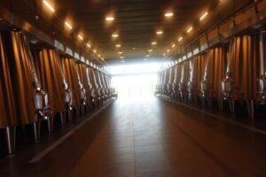 La Dominique Cellars 300x200 Chateau La Dominique St. Emilion Bordeaux Wine, Complete Guide