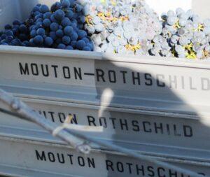 Mouton Grapes 300x253 Chateau Mouton Rothschild, Pauillac, Bordeaux, Complete Guide