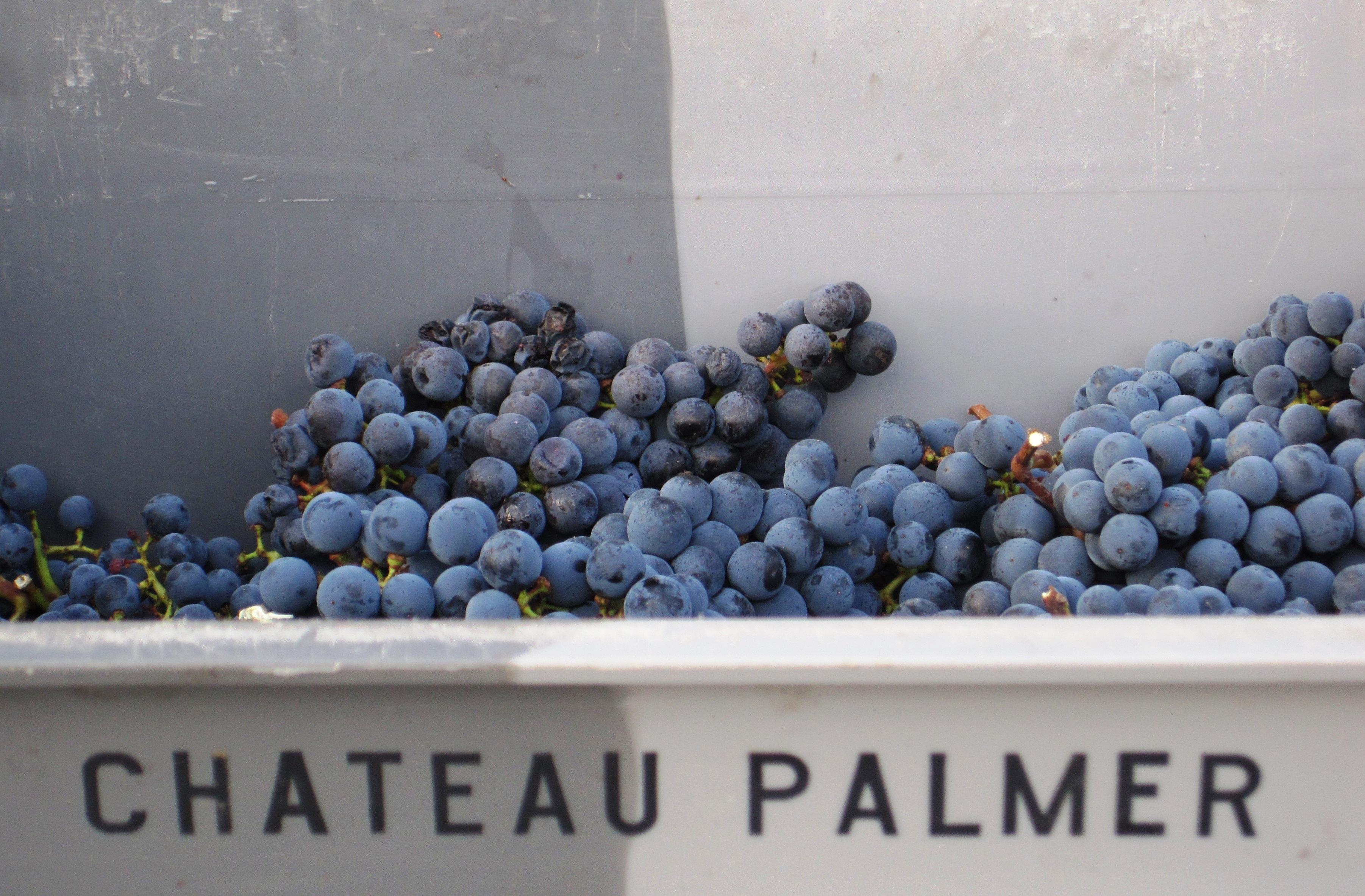 Chateau Palmer Alter Ego de Palmer 2010 Bordeaux Red Blends Wine Red Blends Wine