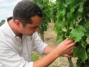 Petrus 5 300x225 Petrus Pomerol Bordeaux Wine, The Complete Guide