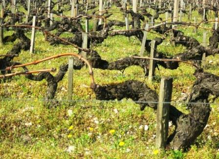 Terroir Haut Medoc, Listrac, Moulis, Medoc, Appellations Bordeaux Wine Guide