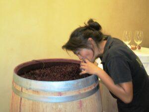 09 Bordeaux Harvest La Fleu Bouard 300x225 2009 Pomerol Harvest, The Pomerol Report Chateaux Owners Comment