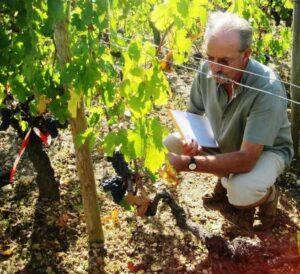 09 Bordeaux Harvest Lafleur 300x274 2009 Pomerol Harvest, The Pomerol Report Chateaux Owners Comment