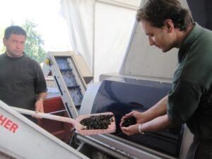 09 Bordeaux Harvest Petrus 300x225 2009 Pomerol Harvest, The Pomerol Report Chateaux Owners Comment