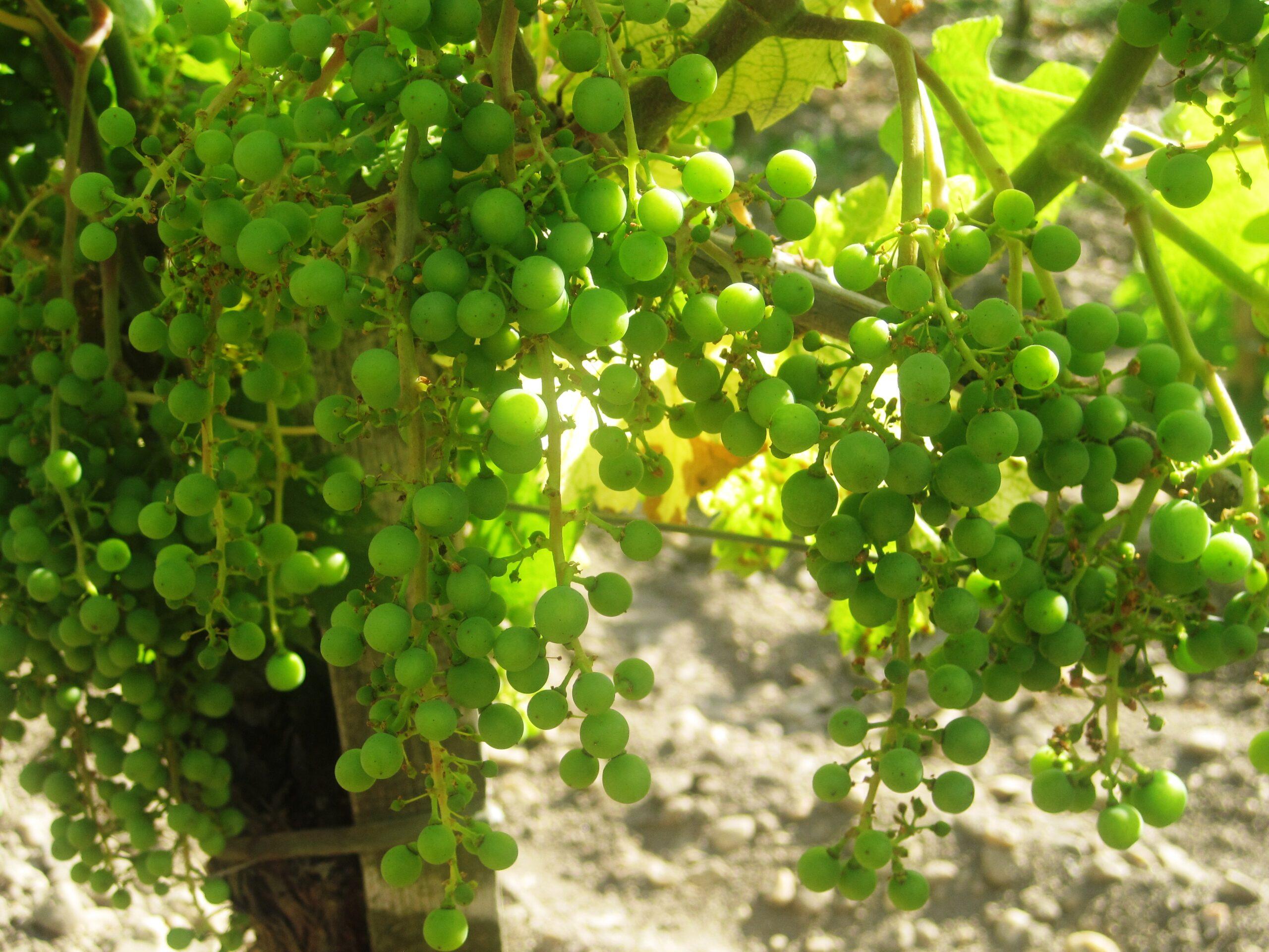 2009 Bordeaux Value Wines of the Vintage