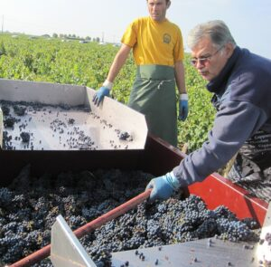 2009 Mouton 300x295 2009 Pauillac Harvest, Pontet Canet waits for the perfect moment in Bordeaux
