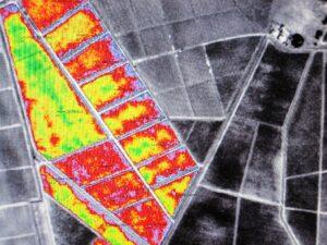 Sat Image 300x225 2009 Branaire Ducru Harvest, Patrick Maroteaux calls vintage unique