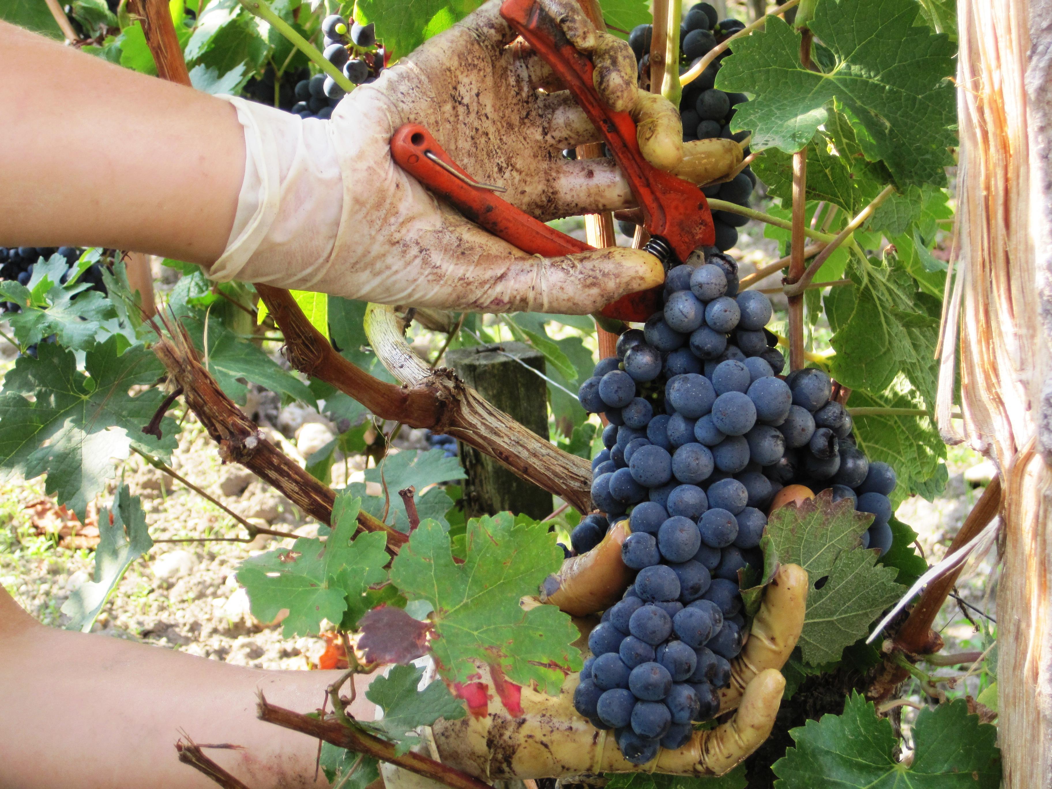 Stephan von Neipperg 2009 St. Emilion is a Historic Bordeaux Vintage!