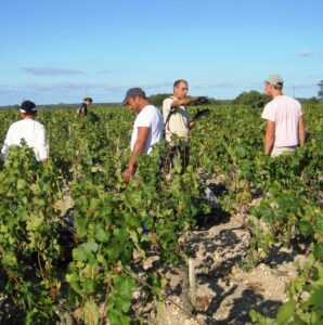 2010 Bordeaux harvest 4 298x300 2010 Mouton Rothschild Harvest Reminds Philippe Dhalluin of 1986, 1996