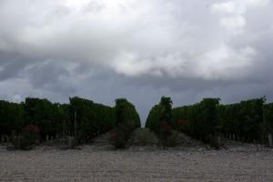 2010 Brane Rain 300x200 2010 Bordeaux Harvest Massive Storm Trashes the Medoc