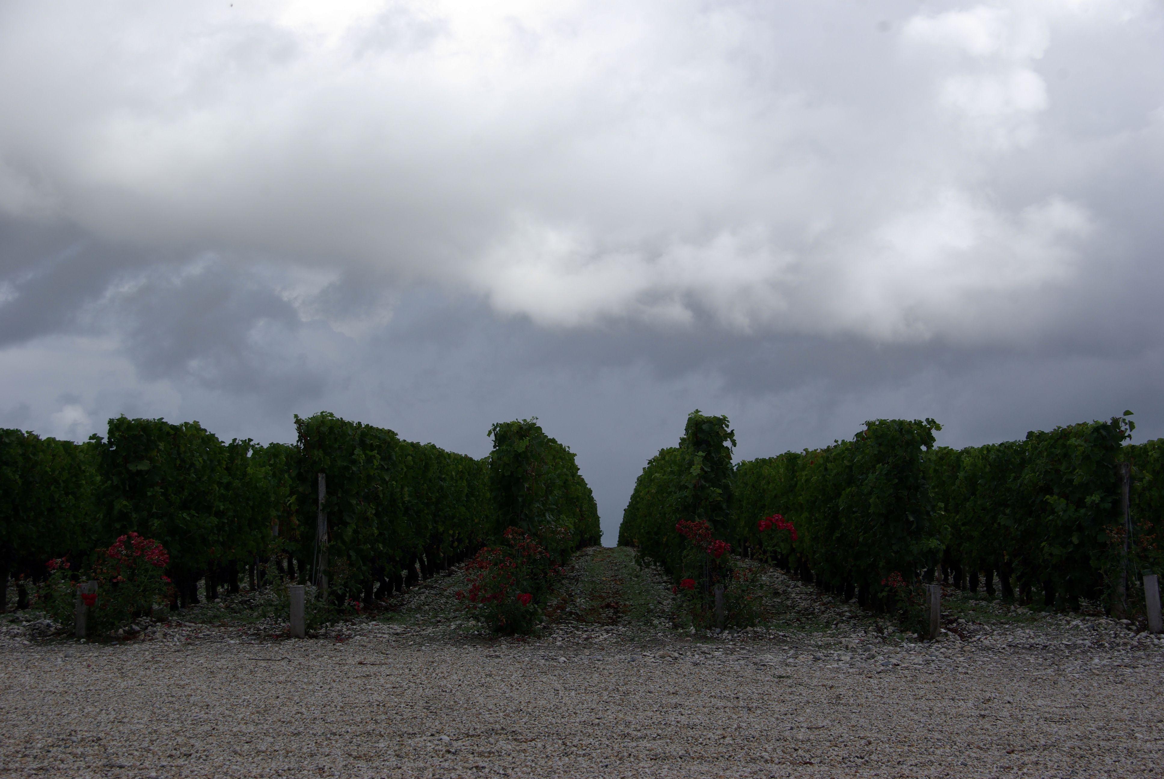 2010 Bordeaux harvest