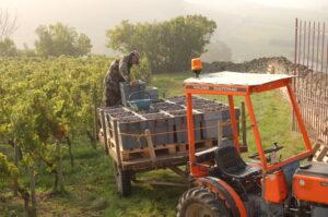 2010 La Clotte tractor 300x199 2010 La Clotte Harvest starts late in St. Emilion Bordeaux