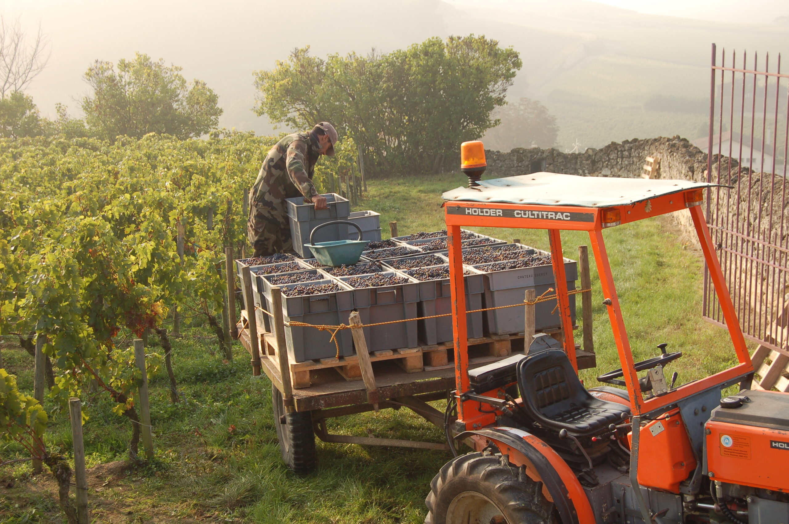 2010 La Clotte Harvest starts late in St. Emilion Bordeaux