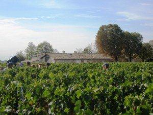 2010 La Conseillante Harvest 2010 Vieux Chateau Certan Harvest Produces 30% Less Wine!