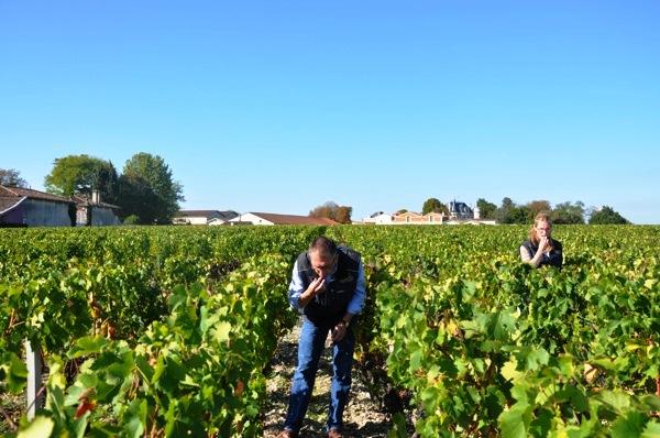 Thomas Duroux during Bordeaux wine harvest