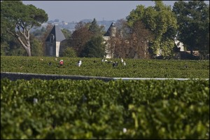 2010 dIssan harvest 300x200 2010 Chateau dIssan Harvest, Warm Days, Cool Nights in Margaux