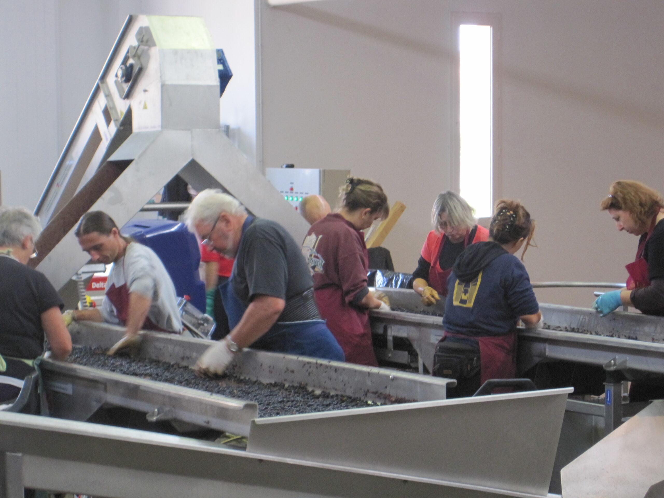 2010 Harvest St. Julien Branaire Ducru, Gruaud Larose, Leoville Barton