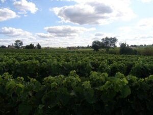 Chateau Fonroque St. Emilion 300x225 2010 Fonroque Biodynamic Harvest Alain Moueix Interview