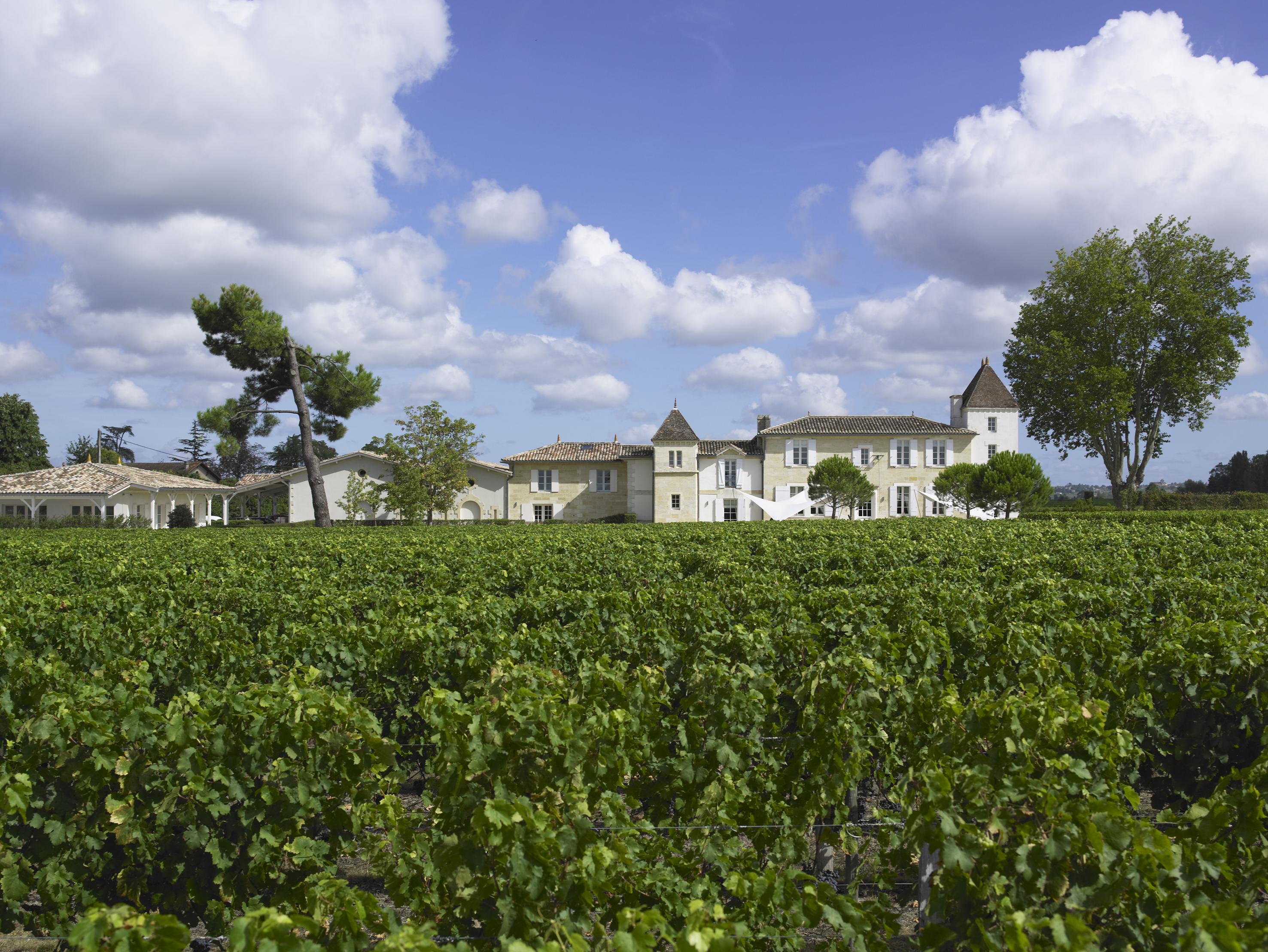 Chateau Clos des Jacobins at Harvest