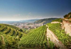 Northern Rhone 300x206 Hermitage Wine Complete Guide to all the Best Wines, Vintages, Vineyards