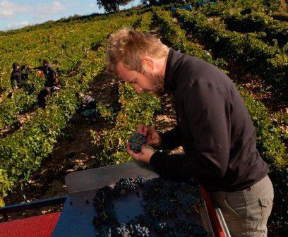 Barroche1 Domaine la Barroche Chateauneuf du Pape, Rhone Wine, Complete Guide
