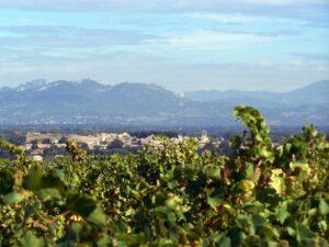 Cristia 300x225 Domaine de Cristia Chateauneuf du Pape Rhone Wine, Complete Guide