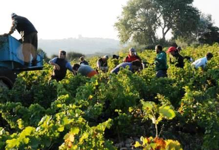 Les Cailloux Wine Tasting Notes, Ratings