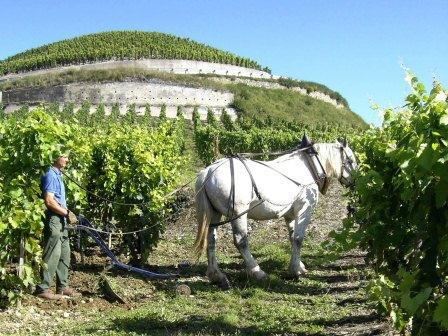 Remizieres1 Wine Tasting Notes, Ratings