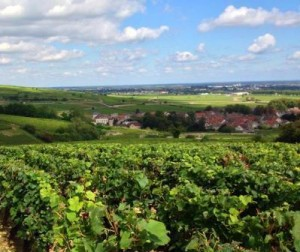 Rhone Valley 300x252 Rhone Valley Complete Guide Cote Rotie Hermitage Chateauneuf du Pape