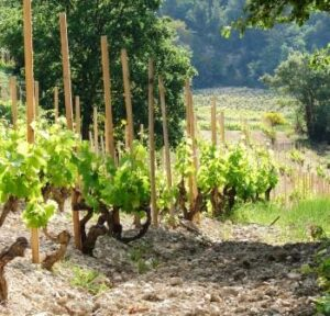 Rhone Valley vineyards 300x288 Domaine de Vallouit Hermitage Rhone Wine, Complete Guide