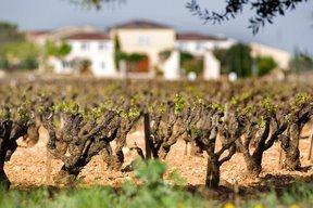 beaucastel Wine Tasting Notes, Ratings