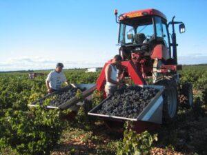 janasse 300x225 Domaine Janasse Chateauneuf du Pape Rhone Wine, Complete Guide