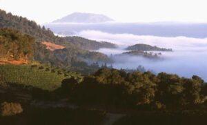 California Wine Producers