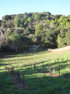 Ridge1 225x300 Ridge Vineyards Santa Cruz Mountain California Wine Cabernet Sauvignon