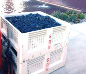 Sine Qua Non Grapes 300x257 Sine Qua Non Central Coast California Syrah Grenache Rhone Varieties