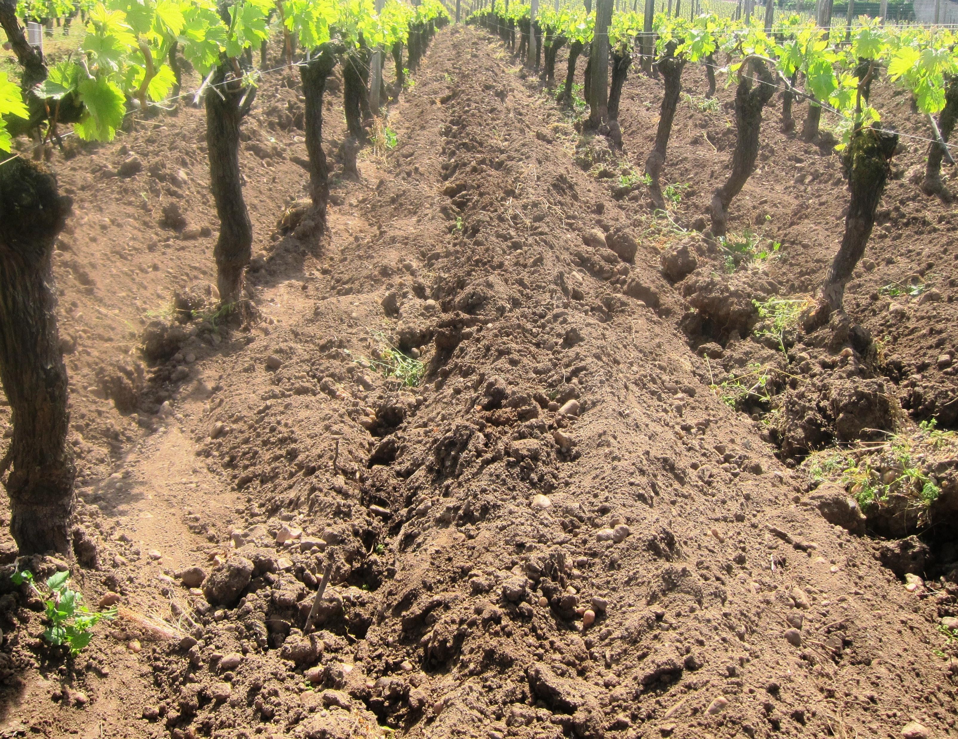2010 Le Pin pomerol wine
