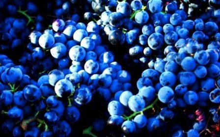 Grenache Domaine de Reveirolles Chateauneuf du Pape Rhone Wine, Complete Guide