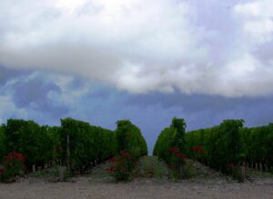 2011 Bordeaux Harvest Storm 300x219 2011 Bordeaux Harvest Massive Storm Slams the Northern Medoc