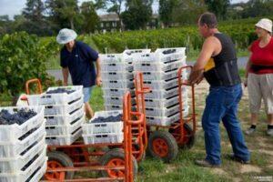 2011 Clos Dubrieul 300x200 2011 Clos Dubreuil St. Emilion Harvest Brings More Freshness