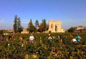 St. Emilion Harvest 300x206 2012 St. Emilion Classification Begins, 96 Chateaux Apply