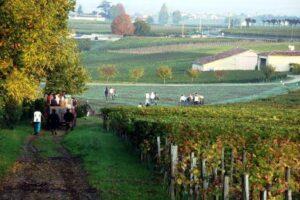 Troplong Mondot Harvest 300x200 2011 Troplong Mondot Harvest Produces Classic Typical Bordeaux Wine