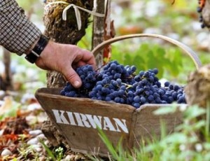 Kirwan harvest 300x230 2011 Kirwan Philippe Delfaut Interview on the Harvest