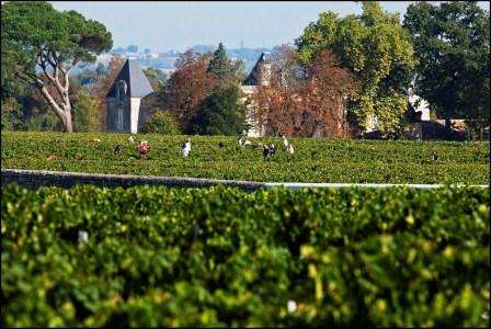 Chateau d'Issan Harvest