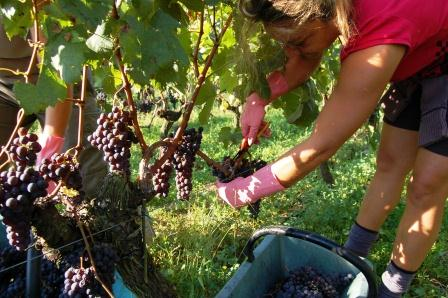 2011 Bordeaux Harvest Pomerol