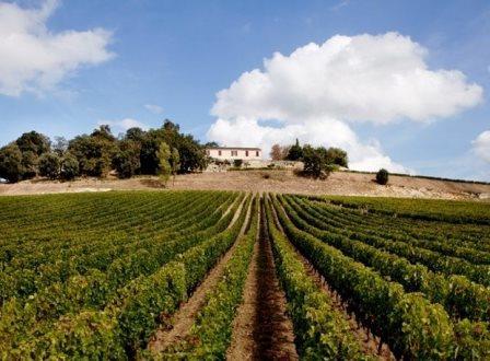 QuintusChateau Chateau Quintus St. Emilion Bordeaux Wine, Complete Guide