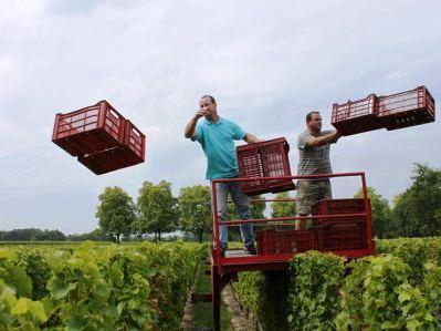 Chateau Reignac, Great Value Bordeaux Wine Producer