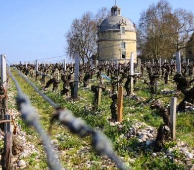 2011 Chateau Latour On the way to Biodynamic in Pauillac