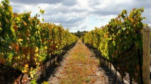 Masi Vineyards 300x168 Masi Tupungato, Touch of Italy in Mendoza Argentina