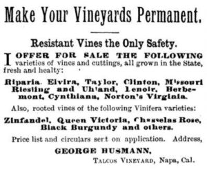 phylloxera 300x255 Complete Napa Valley California Wine History from Early 1800s to Today